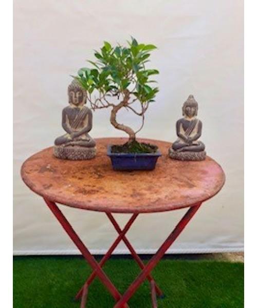 Bonsai 35 cm