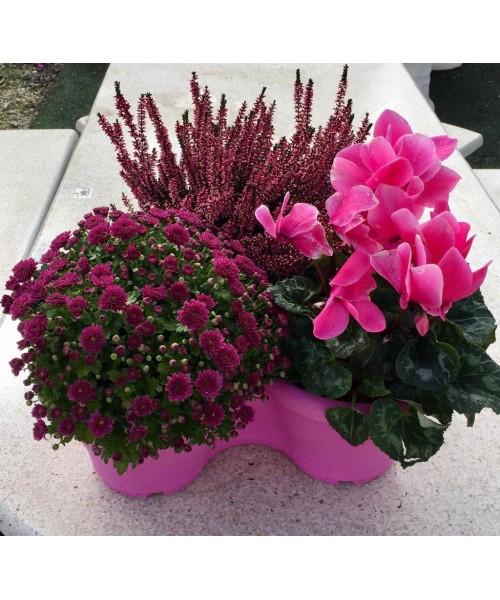 Centro plantas erika ciclamen y crisantemo