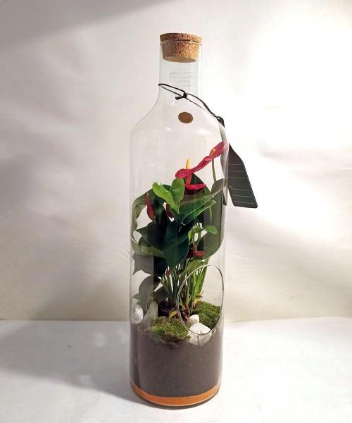 Plantas embotelladas