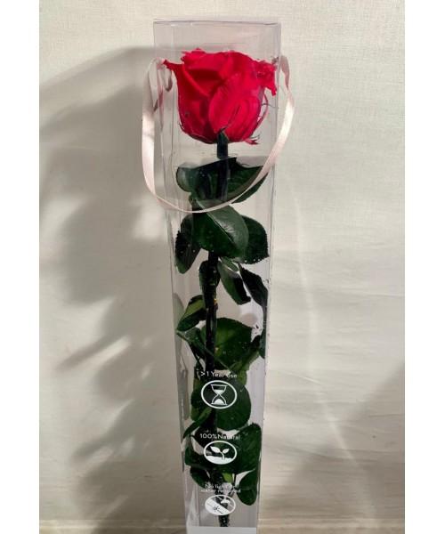 Rosa preservada  56 cm