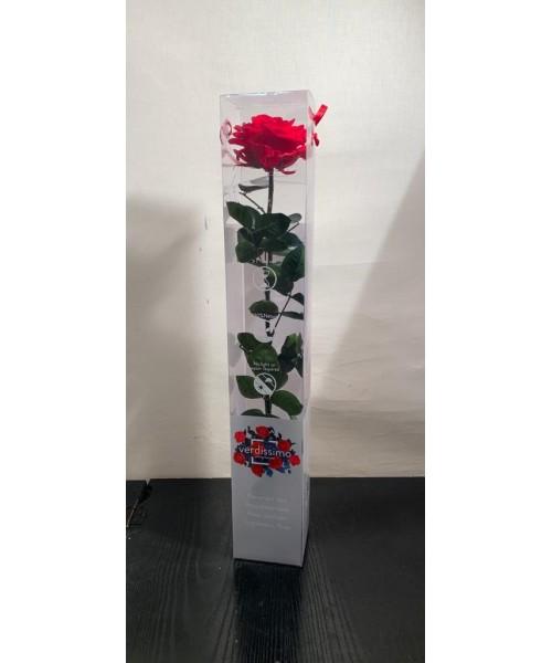 Rosa preservada extra
