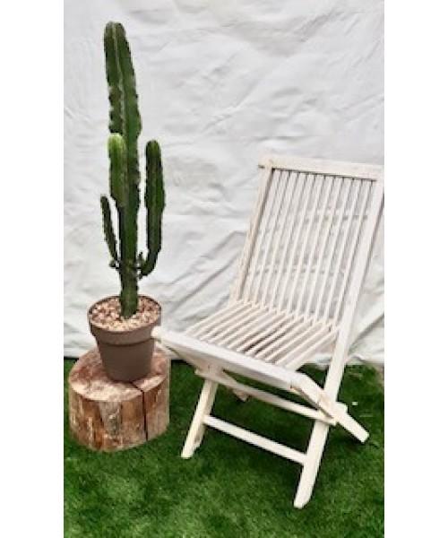 Cactus euphorbia 1,20 m