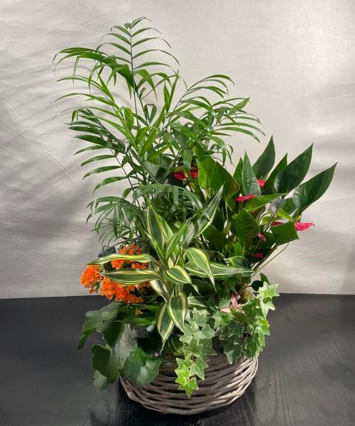 Centro mimbre tropical