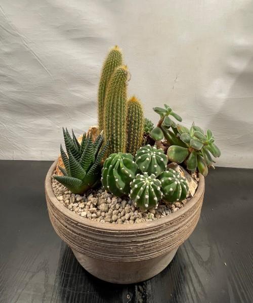 Cerámica con cactus
