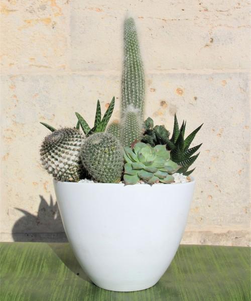 Cerámica cactus variados