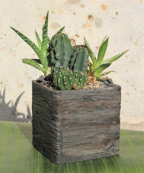 Cerámica cactus