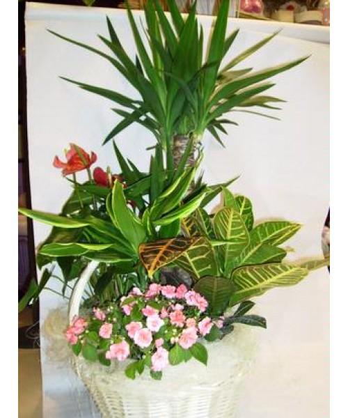 Cesta plantas grande