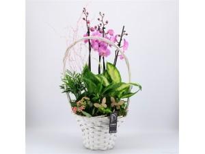 Cesta de plantas con orquídeas