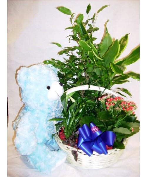 Nacimiento cesta plantas con muñeco