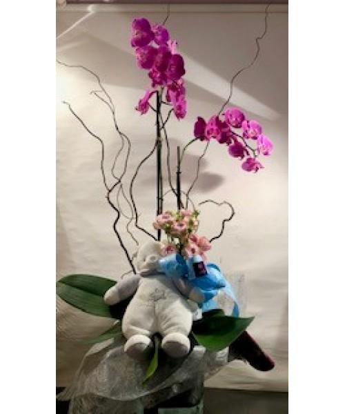 Nacimiento orquidea phalaenopsis con muñeco y vidrio