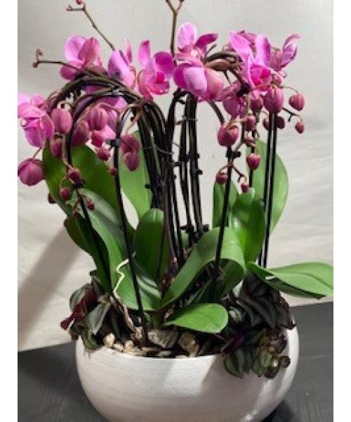 Orquidea arco en centro plantas cerámica