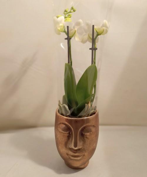 Orquídea Recuérdame