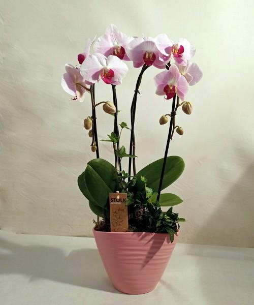 Orquídea con cerámica