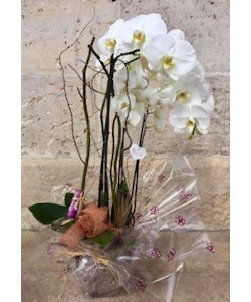 Orquidea phalaenopsis con vidrio