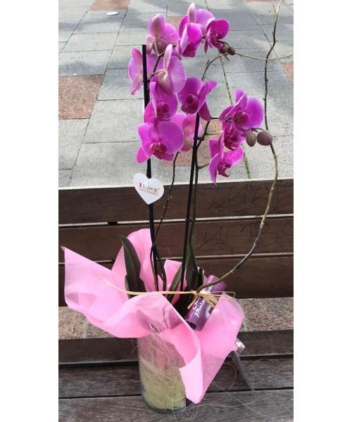 Orquidea phalaenopsis en vidrio