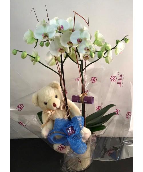 Orquidea phalaenopsis en vidrio y con muñeco