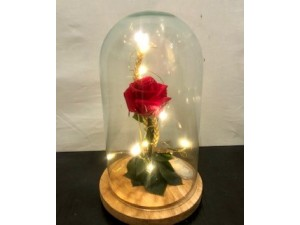 Rosa preservada cúpula luz
