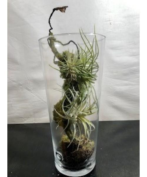 Tyllansias artificial en vidrio 38 cm