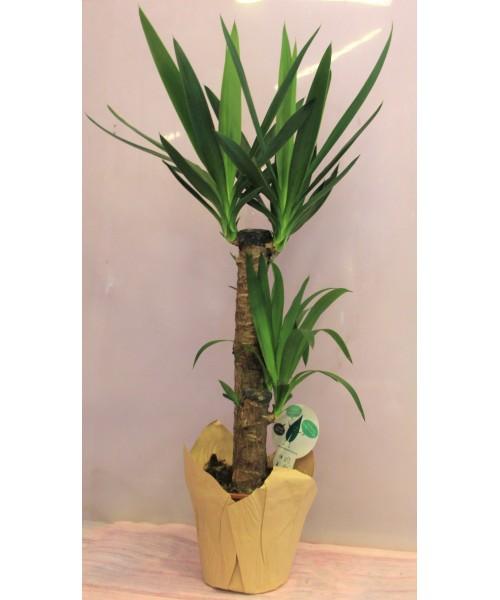Yucca 85 cm