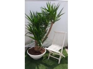 Yucca 170 cm