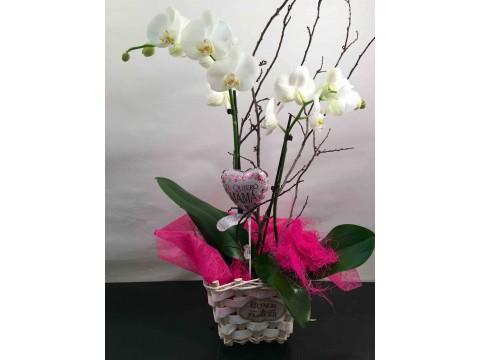 """Orquideas """"Especial Madre"""""""