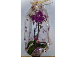 Orquidea en vidrio