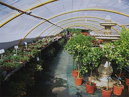 Centros de jardineria en madrid elegant centro de - Centro de jardineria madrid ...